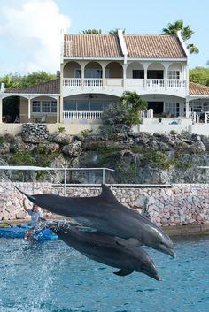 The view of Ocean Resort Villa Condor: http://dushihomes.com/index.php?option=com_hotproperty&task=view&id=61&Itemid=50