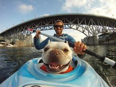 Doggie kayaking smiles...Roscoe so needs to go in my boat! He sure has you smile back!
