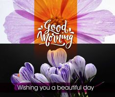 Good Morning image with flowers, Beautiful good morning wishes, good morning flowers image Beautiful Good Morning Wishes, Lovely Good Morning Images, Good Morning Love Messages, Latest Good Morning, Good Morning Images Download, Good Morning Gif, Good Morning Picture, Good Morning Flowers, Good Morning Friends Images