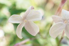 |Atelier Michaux×flowing KARASUMA「flow perfume. flow...」【1】Jasminum(4/15)