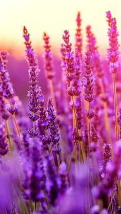 ideas for colorful nature photography flowers fields Purple Flowers Wallpaper, Beautiful Flowers Wallpapers, Flower Phone Wallpaper, Beautiful Nature Wallpaper, Pretty Wallpapers, Beautiful Pictures Of Flowers, Nature Pictures Flowers, Vintage Wallpapers, Blue Wallpapers