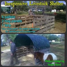 Livestock shelter out of 6 pallets, 2 hog panels, 1 tarp. Could add another pallet in front for more wind protection. Goat Shelter, Horse Shelter, Sheep Shelter, Shelter Dogs, Goat House, Goat Barn, Farm Projects, Future Farms, Mini Farm