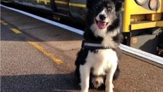 """Condecoran a un perro policía por su heroica actuación en un atentado  Mojo, el primer perro policía que acudió al Manchester Arena el día del atentado en el que 22 personas perdieron la vida será premiado por su """"heroicidad"""" y """"valentía"""". VER MAS"""