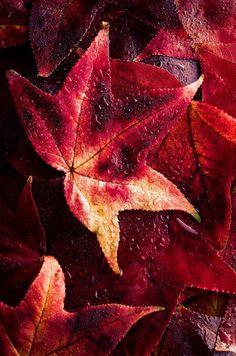 arttherapie:  Fall Colors Jake Schwartzwald  Colors ~ Burgundy