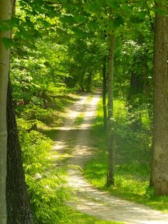 Sun-dappled road in the woods [unable to determine location or photographer]