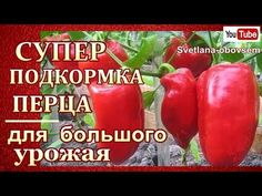 Vegetable Garden, Garden Plants, Small Farm, Farm Gardens, Growing Plants, Diet And Nutrition, Gardening Tips, Cleaning Hacks, Seeds