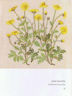 Gallery.ru / Фото #6 - Книга с яблоневой веткой на обложке - Mosca