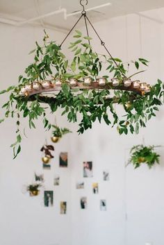 Vine chandelier by Sarah Winward, photo by Kate Osborne