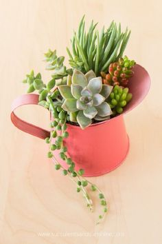 Succulents are so beautiful on their own it doesn't take much to make a great arrangement. These techniques will help your arrangements really stand out! Over the last few years I've created a lot