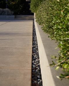 """A long strip of polished stones borders the edge of the pool deck, accounting for drainage. To the right, a hedge of dwarf olive """"speaks to the olive trees beyond"""" in the grove, said Cochran."""