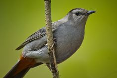 Grey birds Dance - Google Search Pewter Color, Birds, Dance, Google Search, Grey, Animals, Dancing, Gray, Animales