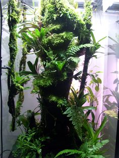 #Frog #Paludarium 60x60x120cm with Water after 6 months, Trunk and Branches coated with #Hygrolon.
