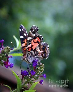Summer Flutter, copyright 2013