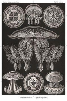 Ernst Haeckel Jellyfish Poster Nautical Art by AdamsAleArtPrints