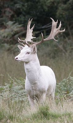 animals at point reyes ca - Google Search