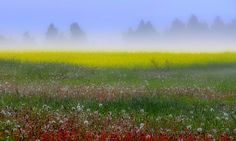 Lithuanian meadow - The flag of Lithuania consists of a horizontal tricolor of yellow, green and red . https://flagspot.net/flags/lt.html