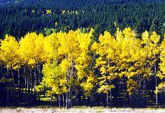 Fall Foliage in RMNP . . . www.stayingrandlake.com