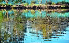 #Little #Ripples by #Kaye_Menner #Photography Quality Prints Cards Products at: http://kaye-menner.pixels.com/featured/little-ripples-by-kaye-menner-kaye-menner.html