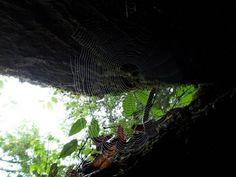 Wednesday November 20 God And The Spider
