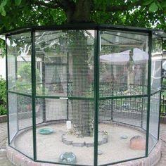 Diy Bird Cage, Bird Cages, Diy Cat Enclosure, Bird Aviary, Budgies, Boat Building, Bird Houses, Birds, Pets