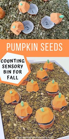 Learn how to make a Fall sensory bin that will also teach your preschoolers about counting pumpkin seeds. This sensory bin will help to develop fine motor skills, language and math, all while your kids play.  #fall #autumn #sensory #fine motor #math #preschooler #toddler
