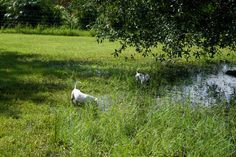 More playing around the pond.