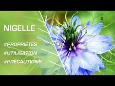 Plants That Should Be Left Outside Nigella Sativa, Cumin Noir, Garden Tools, The Outsiders, Conscience, Youtube, Gardens, Herbal Plants, Seeds