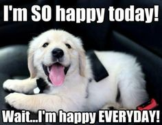 Happy puppy!