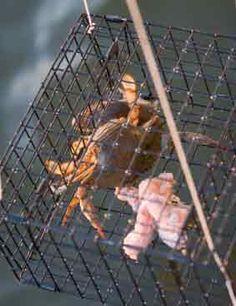 Crabbing at the Jersey Shore