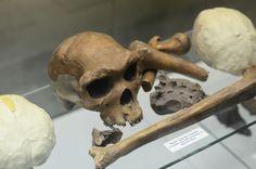 #Travel #tour #Darwin Museum (200)