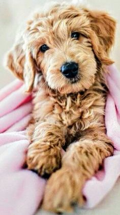 ❤️ Cute Baby Animals, Animals And Pets, Funny Animals, Cute Puppies, Cute Dogs, Dogs And Puppies, Doggies, Funny Dogs, Doodle Dog