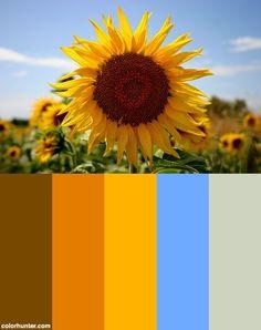 Sunflower Color Scheme