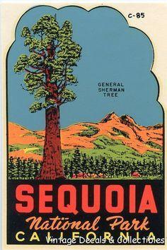 Vintage Sequoia National Park California General Sherman Tree Travel Decal