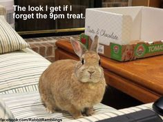 Here are some pictures of our bunnies that have been posted on the   Rabbit Ramblings Facebook page .   Other bunnies' Funny Bunny Memes ar...