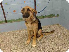 8/4****Help! 8/1 URGENT San Bernardino, CA - German Shepherd Dog Mix. Meet URGENT on 7/13 SAN BERNARDINO, a puppy for adoption. http://www.adoptapet.com/pet/16026090-san-bernardino-california-german-shepherd-dog-mix