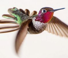 Hummingbirds... so fragile and beautiful. Like human souls.