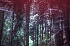 forest Digital, Plants, Photography, Art, Art Background, Photograph, Fotografie, Kunst, Photo Shoot