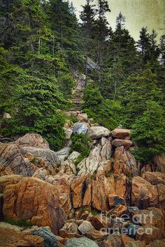 At low tide it is a rough but rewarding climb down over all the rocks on the shoreline near Bass Harbor Head Light on Mount Desert Island, Maine