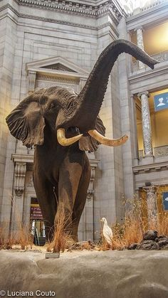 Museum of Natural History, Washington DC, USA...all Smithsonian Museums on The all are FREE!