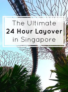 The Ultimate 24 Hour Layover in Singapore