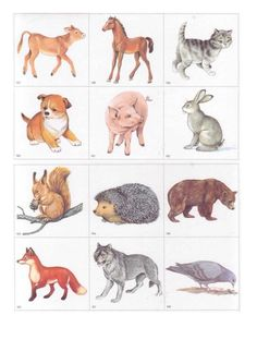 Предметные картинки Forest Animals, Farm Animals, Animals And Pets, Preschool Themes, Kindergarten Activities, Diy Toys And Games, Toddler Class, Printable Animals, Animal Projects