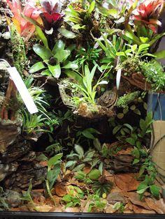Epic viviarium for frogs, but some great inspiration. Reptile Room, Reptile Cage, Reptile Enclosure, Gecko Terrarium, Reptile Terrarium, Gecko Vivarium, Planted Aquarium, Aquarium Fish, Red Eyed Crocodile Skink