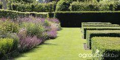 Ogród nie tylko bukszpanowy - część III - strona 667 - Forum ogrodnicze - Ogrodowisko