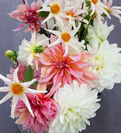 Article: When to plant dahlias. Dahlias are some of the lowest maintenance, highest production cut flowers and garden plants you can grow.