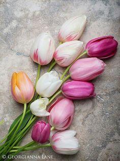 Tulips ♡ ✨ ᘡℓvᘠ❤ﻸ•·˙❤•·˙ﻸ❤□☆□ ❉ღ // ✧彡☀️● ⊱❊⊰✦❁ ❀ ‿ ❀ ·✳︎· ☘‿TH OCT 05 2017‿☘ ✨ ✤ ॐ ♕ ♚ εїз ⚜ ✧❦♥⭐♢❃ ♦•● ♡●•❊☘ нανє α ηι¢є ∂αу ☘❊ ღ 彡✦ ❁ ༺✿༻✨ ♥ ♫ ~*~♆❤ ✨ gυяυ ✤ॐ ✧⚜✧ ☽☾♪♕✫ ❁ ✦●❁↠ ஜℓvஜ