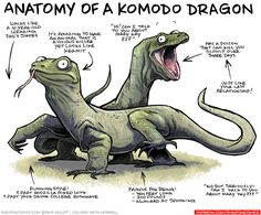 Anatomy of a Komodo Dragon