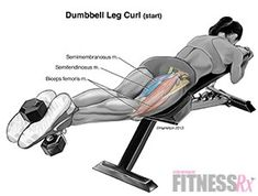lying hamstring curl - Google Search