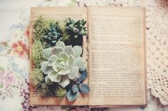 Turn vintage book into planter for succulent (can use as centerpiece/party decoration).