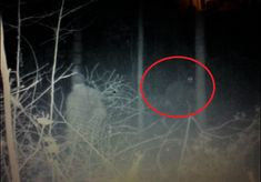 Bigfoot News: Elusive cryptid captured in trail cam photo? Bigfoot Photos, Bigfoot News, Bigfoot Hunter, Legends And Myths, Mothman, Aliens And Ufos, The Secret History, Cryptozoology, Shiloh
