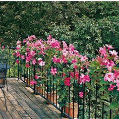 Mandevilla - Spectacular Container Gardening Ideas - Southern Living - Mandevillas in containers twine through this railing on a rooftop deck. Reveling in hot weather, mandevilla can grow more than 10 feet a year. Diy Garden, Dream Garden, Home And Garden, Garden Ideas, Container Plants, Container Gardening, Gardening Tips, Organic Gardening, Backyard Fences